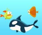 Balıkların Hayatı