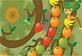 Meyve Çevirmek