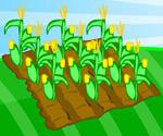 Minik Çiftlik