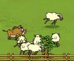 Kuzu Çobanı