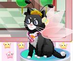 Kedi Salonu