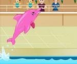 Yunus Balığı Sirki