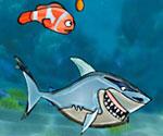 Balık Yarışı