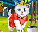 Kedi Prens