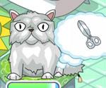 Kedi Ve Köpek Kuaförü