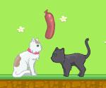 Aşık Hayvanlar