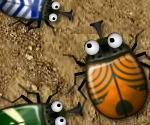 Böcek Aşkı