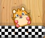 Hamster Doyurma