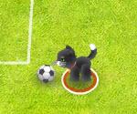 Evcil Hayan Futbolu