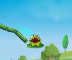 Kurbağa Su İçir