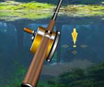 Gölde Balık Tutma
