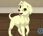 Benim Köpeğim