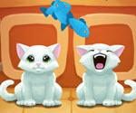 Kedilere Balık Yedirme