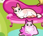 Kedi Bahçesi
