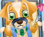 Köpek Ameliyatı