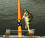 Süper Balıkçılar