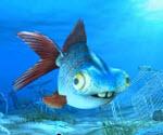 Süper Balık