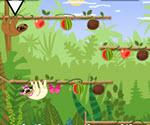 Orman Meyveleri