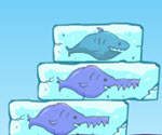 Denge Balıkları