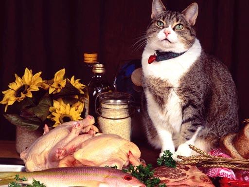 Eğlenceli Kedi Yapboz