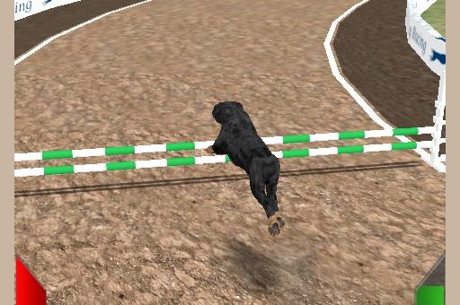 Köpek Yarışı Simülatör