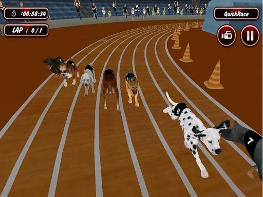 Gerçek Köpek Yarışı