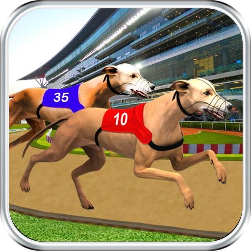 Köpek Yarışları