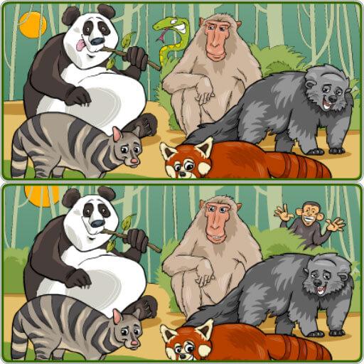 Safari Farklılıkları
