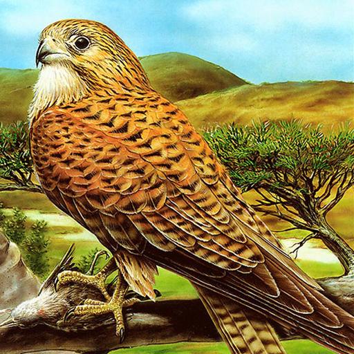 Vahşi Kuş Yapbozu