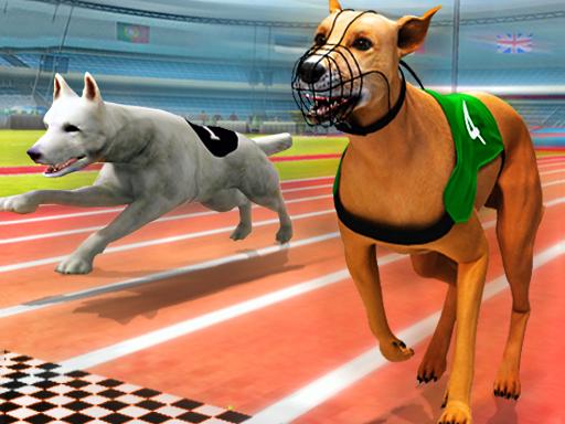 Gerçek Köpek Yarışları
