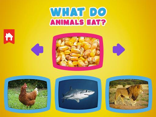 Hayvanlar Ne Yer?